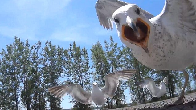 Vettel blames seagulls Montreal 2016